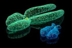 Cromossomos X ou Y